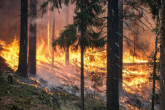forest-fire-2268725_960_720